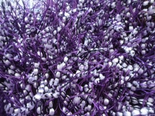 31 Night Purple Knot Ball